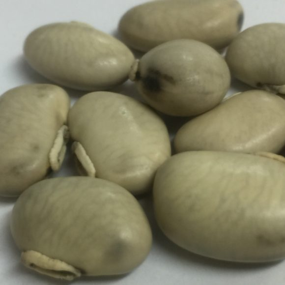 MUCUNA WHITE SEEDS