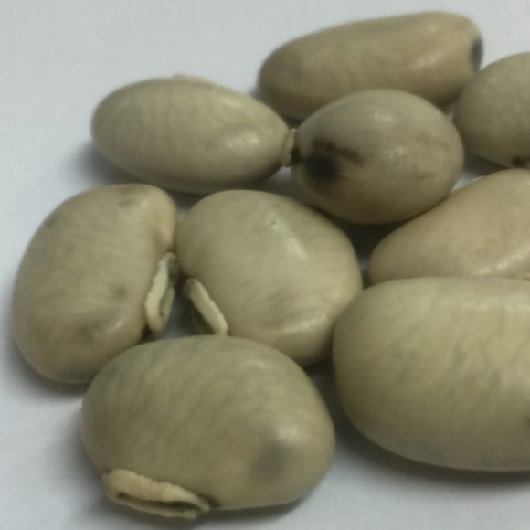 MUCUNA WHITE SEEDS3