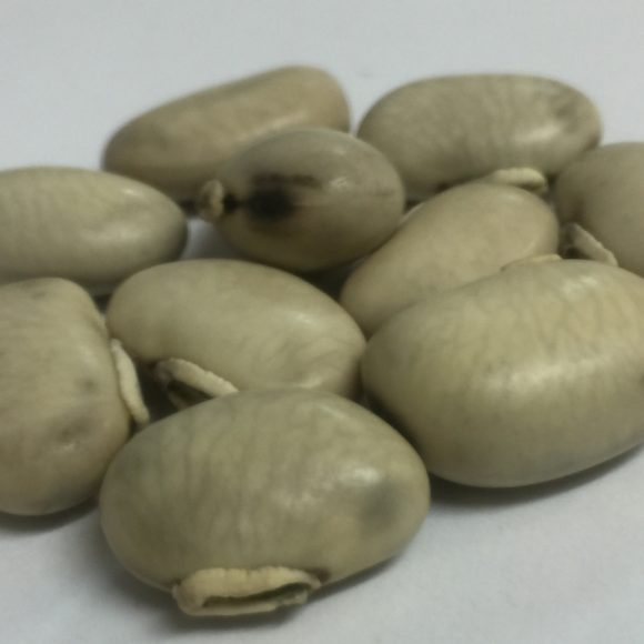 MUCUNA WHITE SEEDS4
