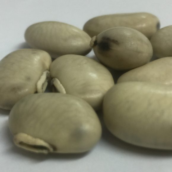 MUCUNA WHITE SEEDS5