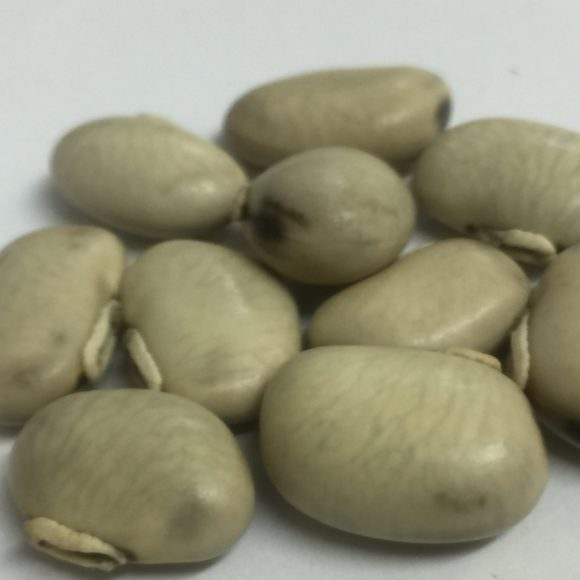 MUCUNA WHITE SEEDS6