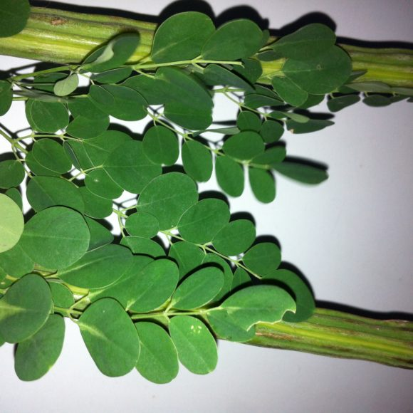 moringa_leaves_with_pods140830132753f0f90f15ee2