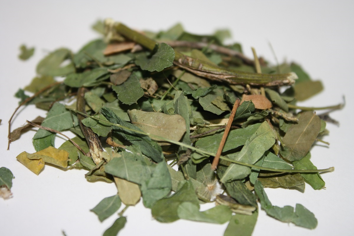 Ratti Leaf Abrus Precatorius Leaf Tea Crabs Eye Leaves Herbalveda